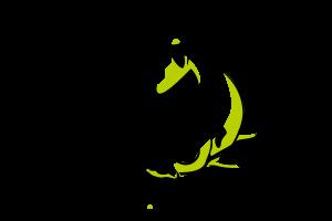 Logo-koi - Darumastudio